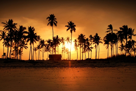 SunsetPalmowyPoziom